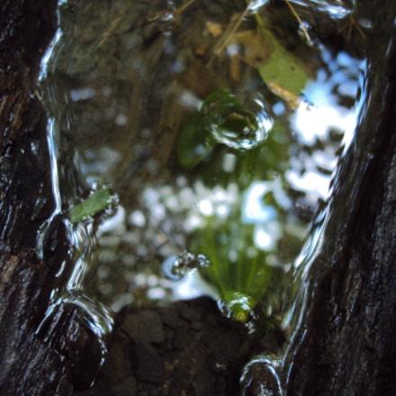 A leaf., Sony DSC-W180