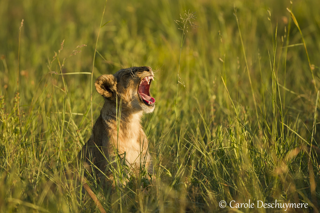 Photograph Yawn! by Carole Deschuymere on 500px