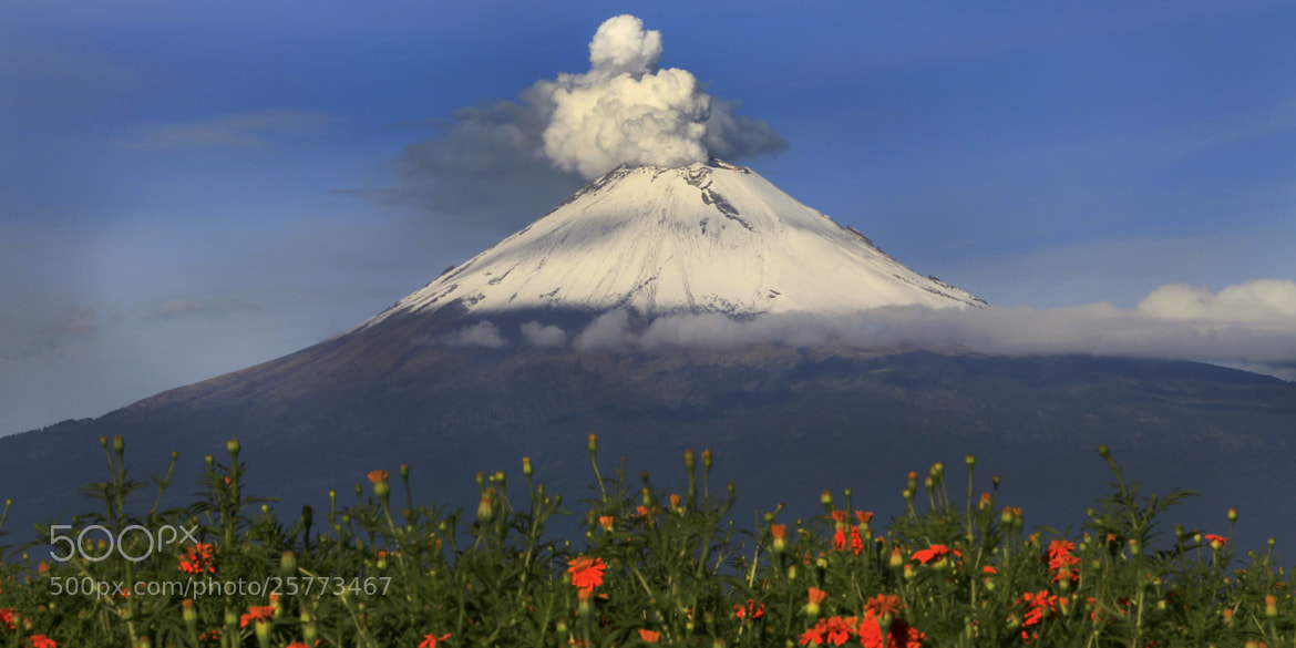 Photograph Snowy volcano and flowers by Cristobal Garciaferro Rubio on 500px