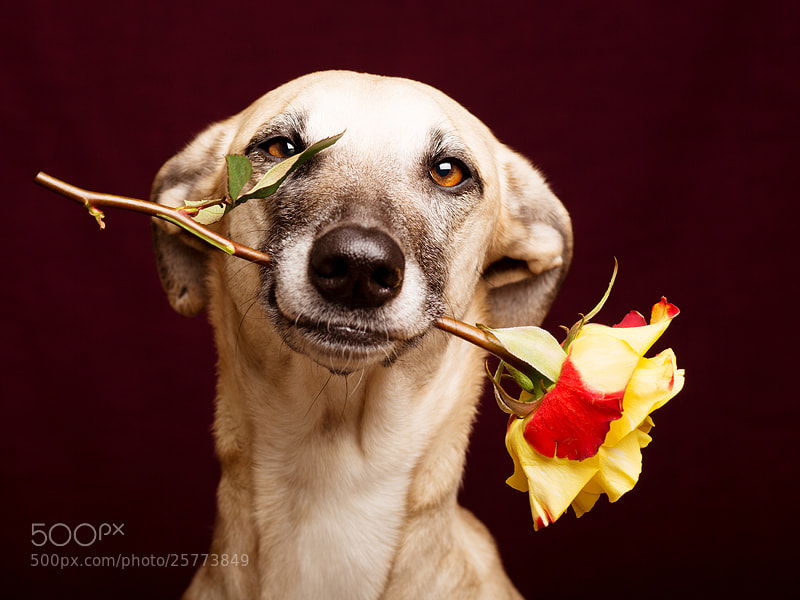 Photograph Be my valentine by Elke Vogelsang on 500px