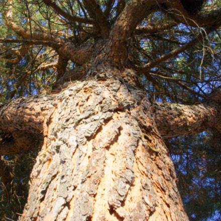 Under the centenary tree..., Pentax K10D, smc PENTAX-DA 18-55mm F3.5-5.6 AL