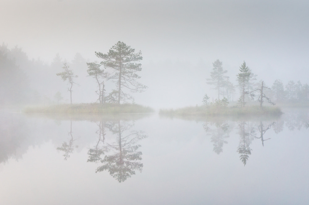 Photograph Morning in the bog by Janek Laanemäe on 500px