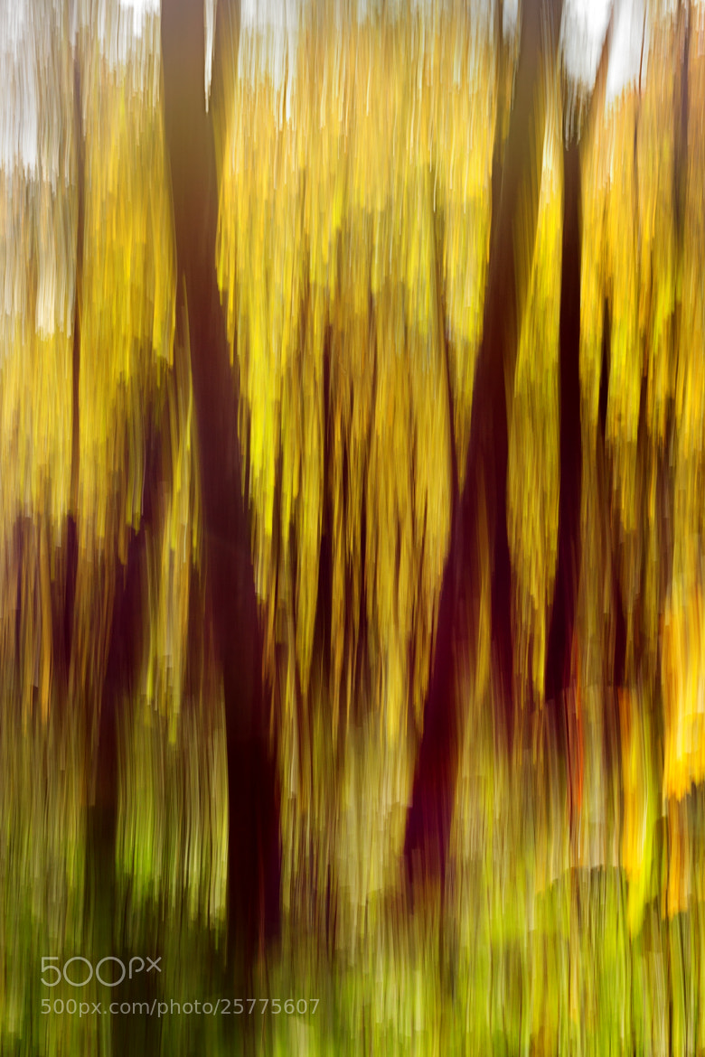 Photograph Autumn abstraction by Lukas Jonaitis on 500px