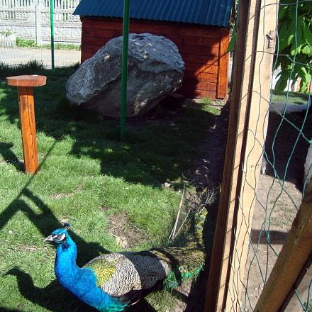 Birds in the aviary, Sony DSC-W120