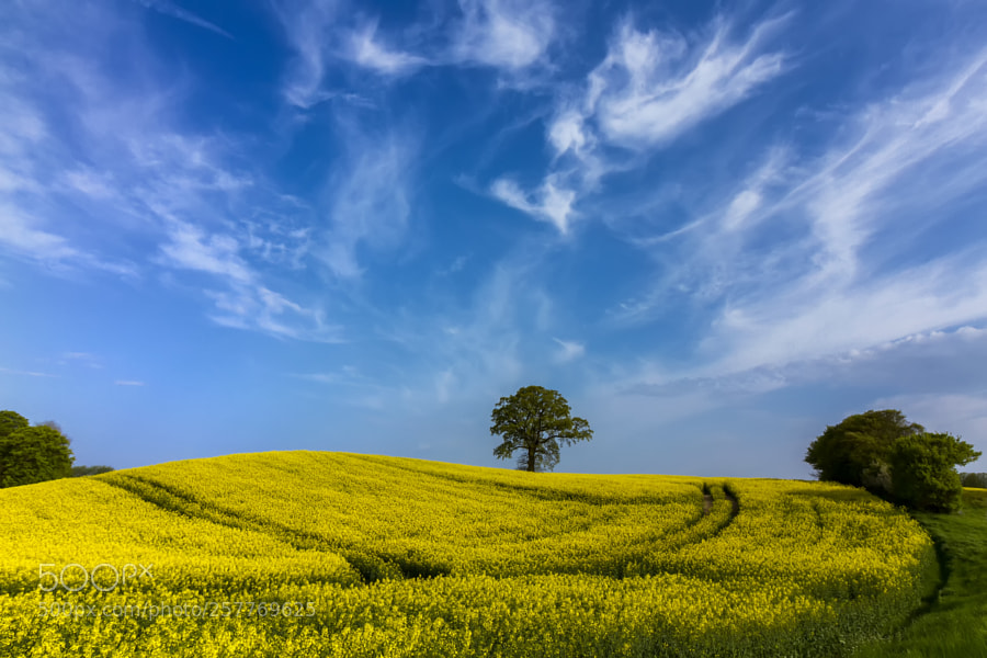 The yellow field time