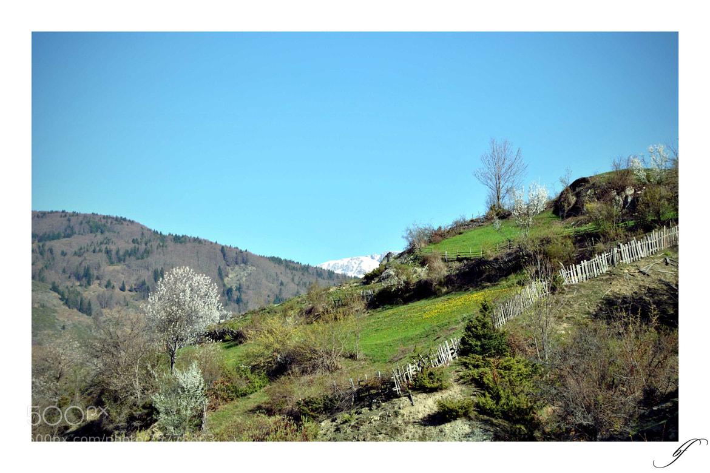 Photograph Spring Memories by Burim Fejsko on 500px