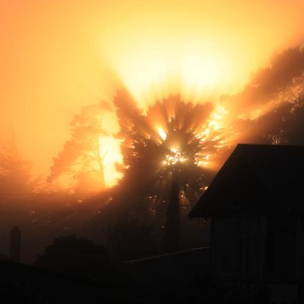 fog day morning, Canon EOS 500D