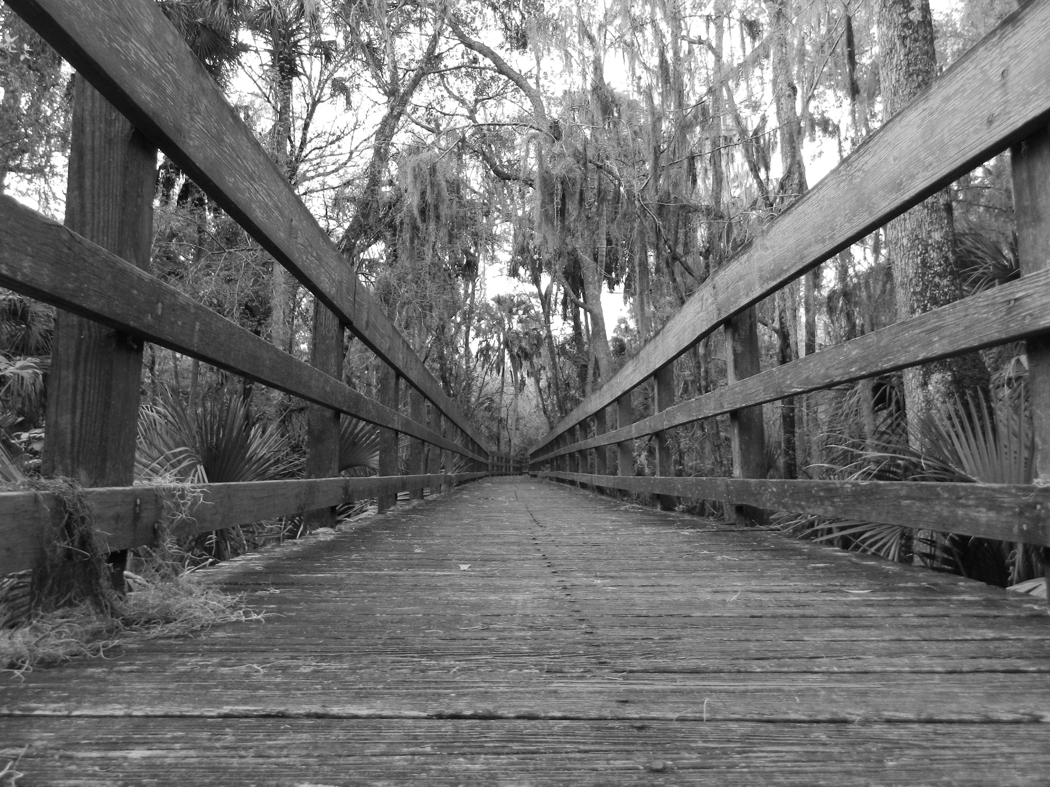 Photograph The path down the wooden bridge by Chloe Zentkovich on 500px