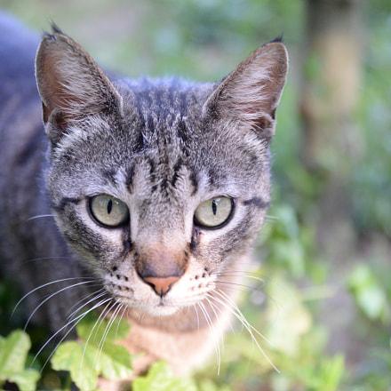 The Cat, Nikon D610, AF Zoom-Nikkor 24-85mm f/2.8-4D IF