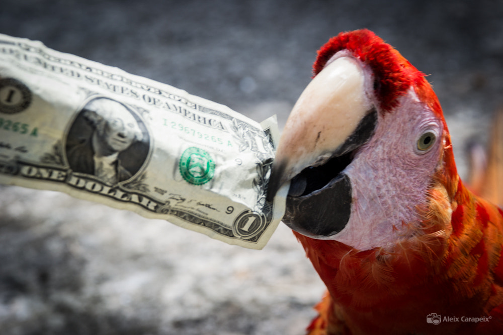 Photograph One Dollar $ by Aleix Carapeix on 500px