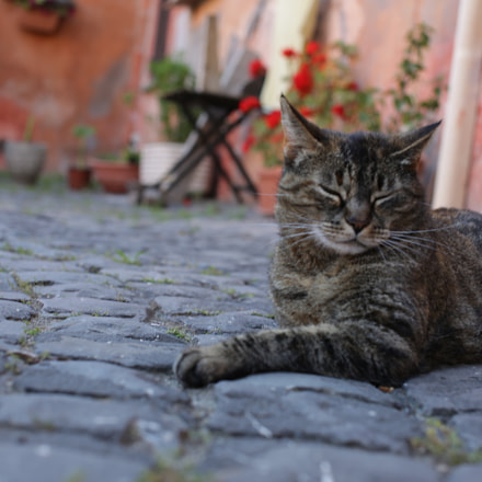 Cat in the old, Canon EOS 5D MARK III, Sigma 50mm f/1.4 EX DG HSM