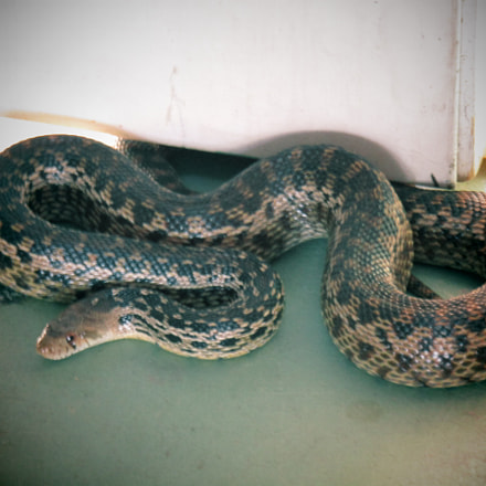 Snake in the House, Canon POWERSHOT SX420 IS