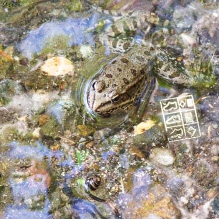 Frog - Do not, Fujifilm FinePix S8200