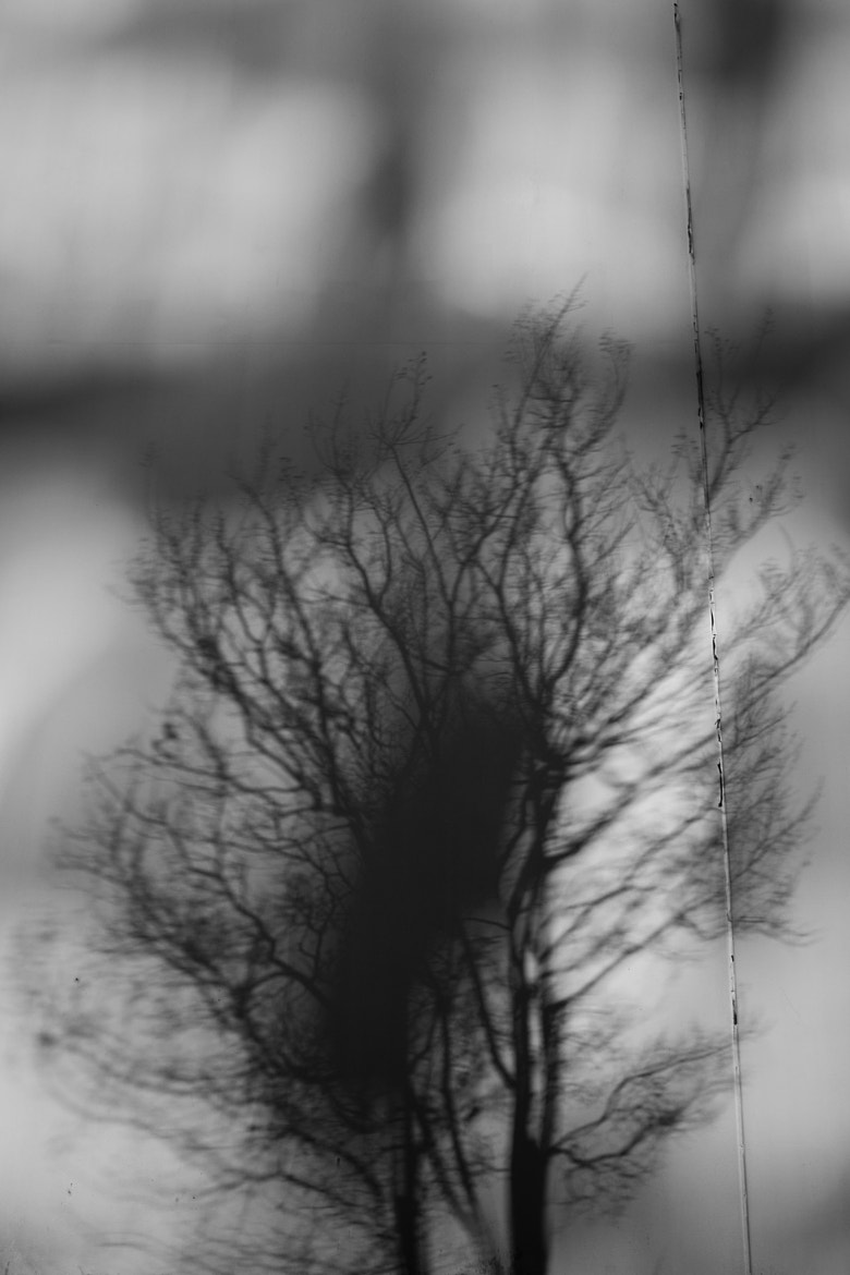 Photograph Tree Shadow in Reflected Light by Adam Haile on 500px