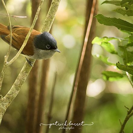 Z'oiseau la Vierge – Cilaos –Île de la Réunion
