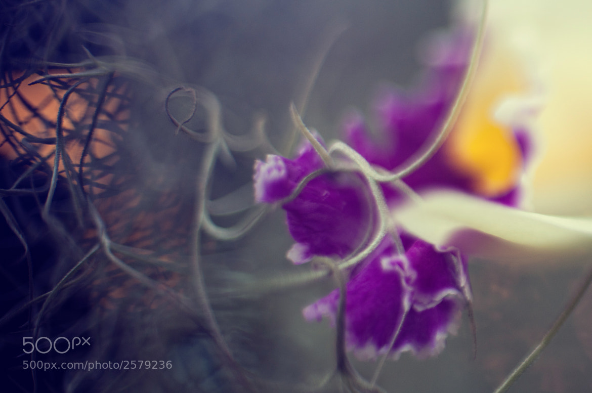 Photograph captivated orchid by Olga Borodina on 500px