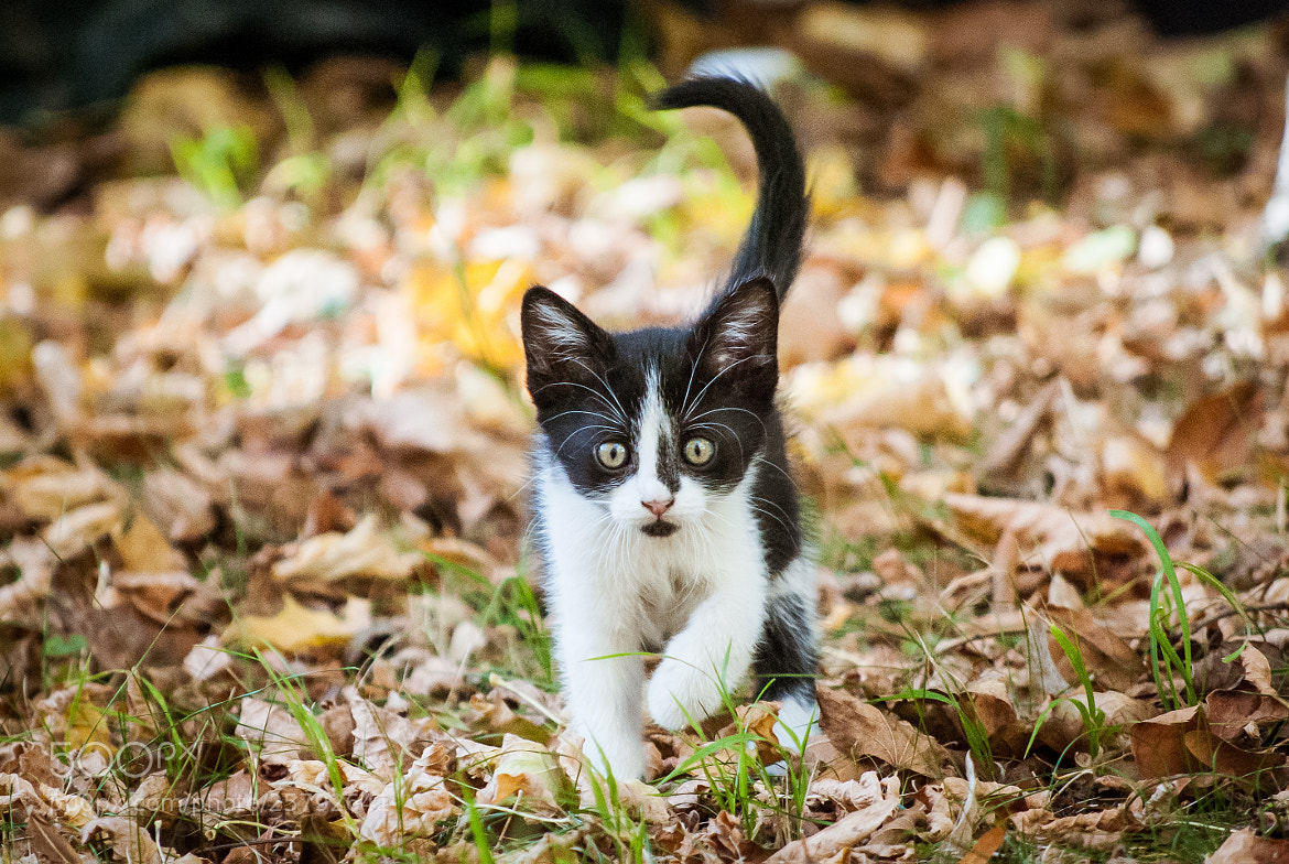 Photograph Autumn Kittens 1 by Free Mindflow on 500px