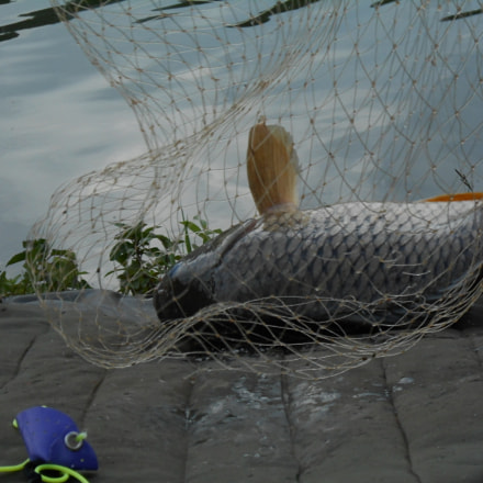 Riba, Nikon COOLPIX S2700