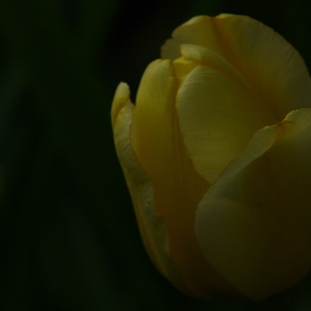 Yellow -- difficult to, Pentax K-5 II S, Tamron AF 70-300mm F4-5.6 LD Macro 1:2