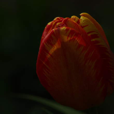 The touch of light, Pentax K-5 II S, Tamron AF 70-300mm F4-5.6 LD Macro 1:2