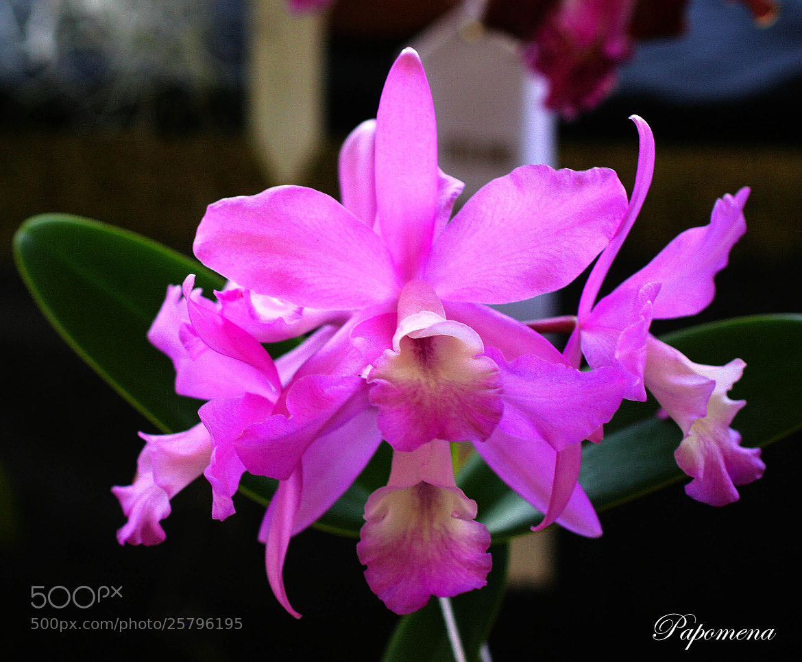 Photograph Orchid Festival by Papo Mena on 500px