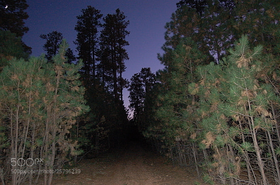 Photograph Night road on the Rim by Sarah Sperling on 500px