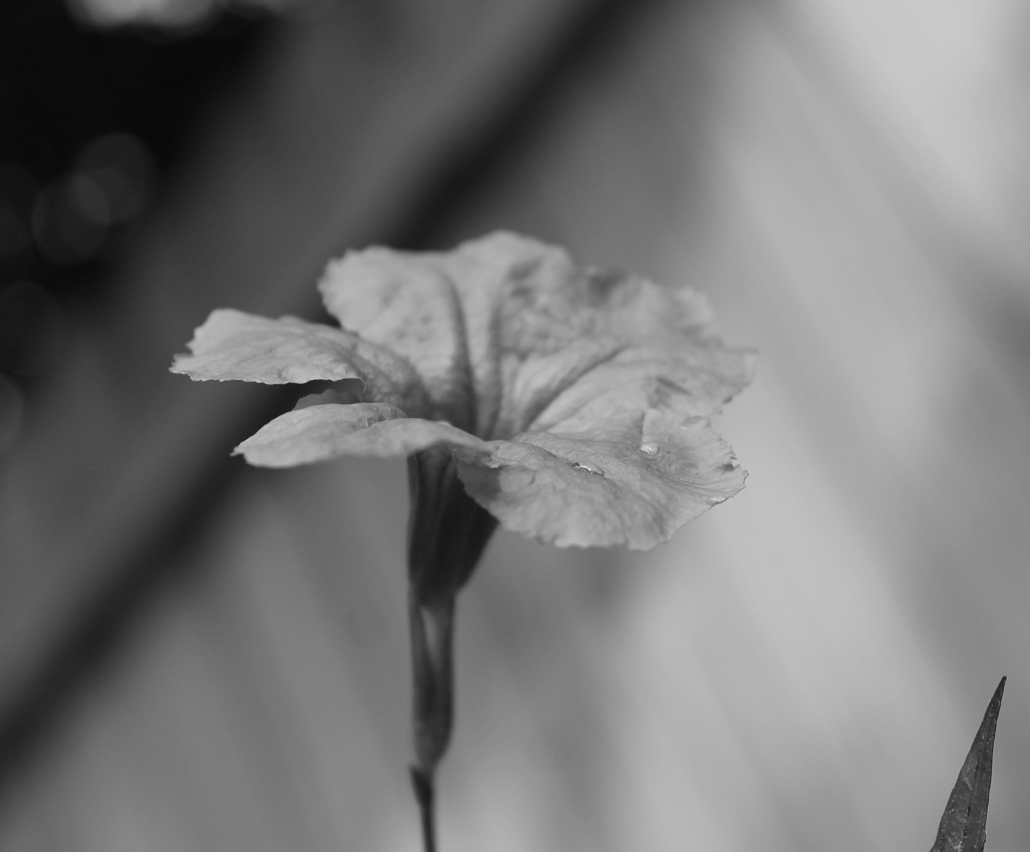 Photograph That one flower by Chloe Zentkovich on 500px