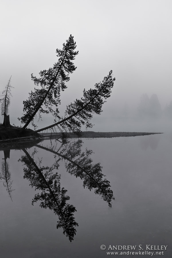 Photograph Trees in Fog by Andrew Kelley on 500px