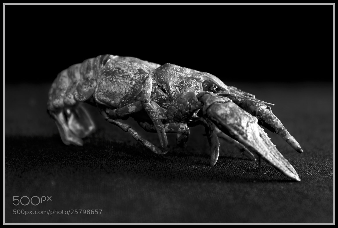 Photograph The Inglorious Prawn by Jeremiah  Policky on 500px