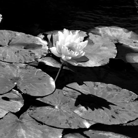 Lotus, Panasonic DMC-ZS35