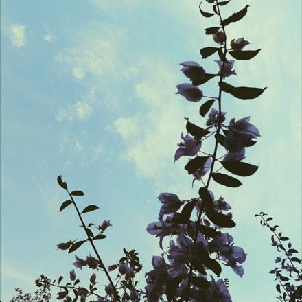Flowers, Fujifilm FinePix S4400