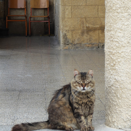 cats of Rhodes I, Panasonic DMC-TZ71