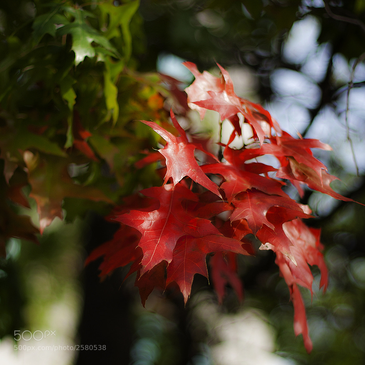 Photograph Red by chinh n on 500px
