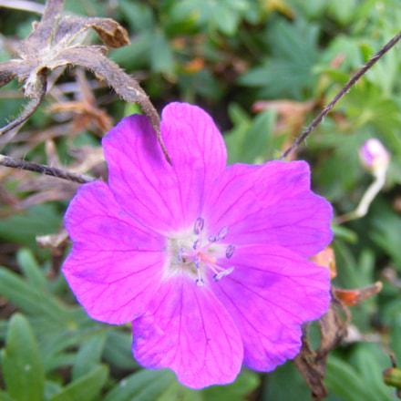 Flower, Fujifilm FinePix S5800 S800