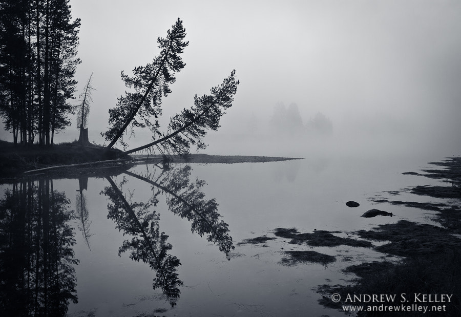 Photograph Trees in Fog II by Andrew Kelley on 500px