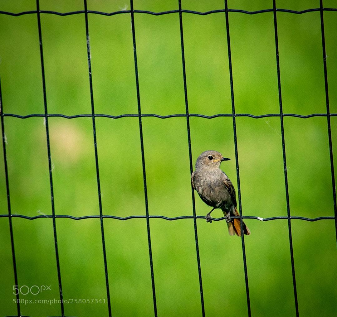 Bird simplicity