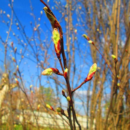 Spring came, Canon POWERSHOT A2500