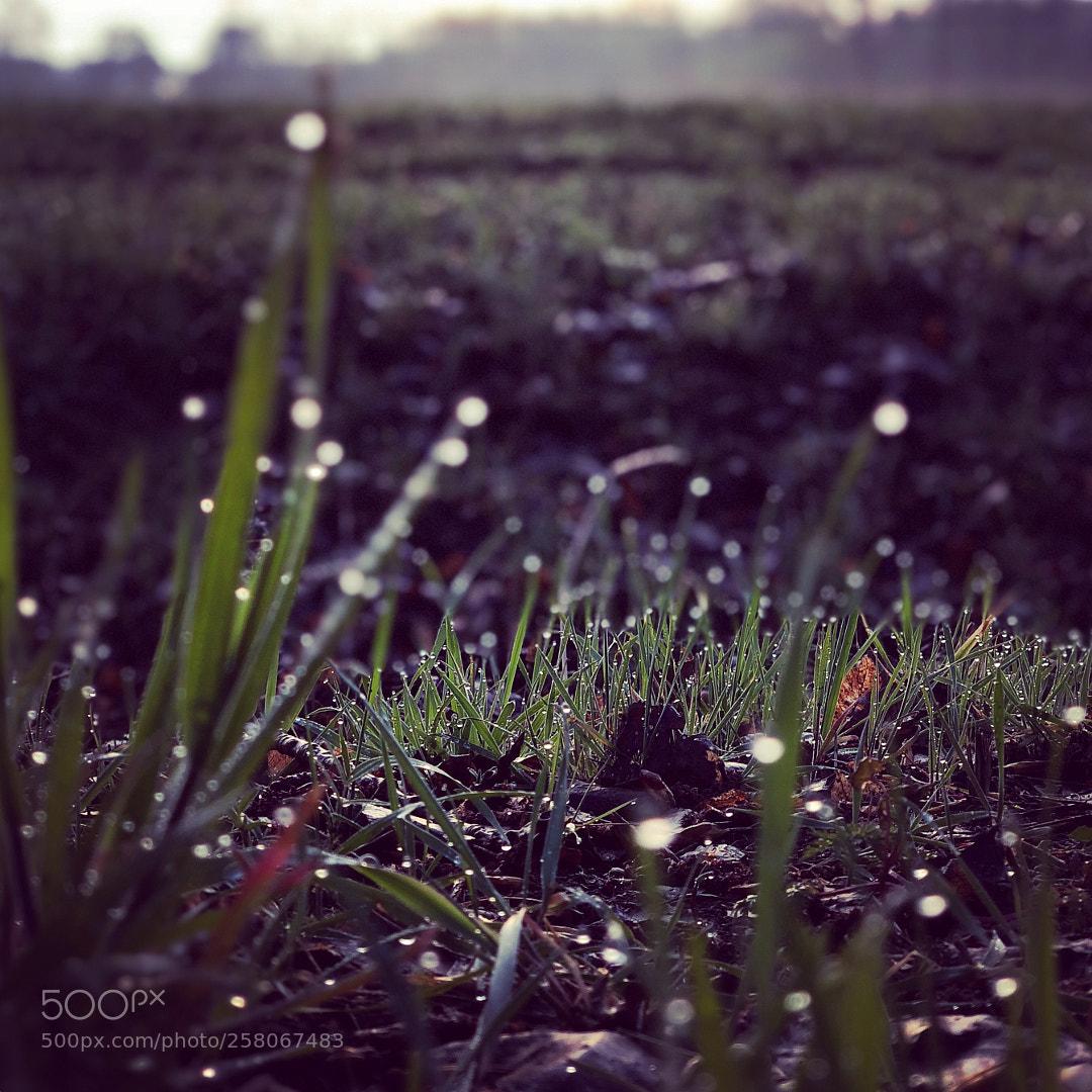 Grass dawn
