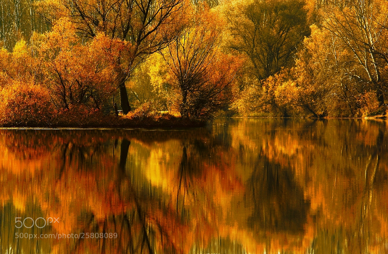 Photograph autumn splendor by Andy 58 on 500px