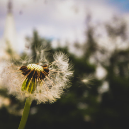 Summer Beauty, Nikon COOLPIX L100