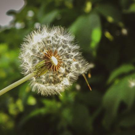 Macro beauty in one, Nikon COOLPIX L100
