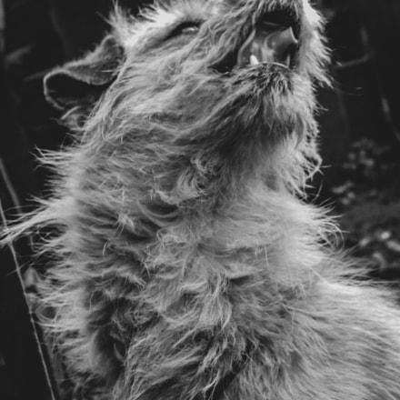 Little Tiger :)), Nikon COOLPIX L100