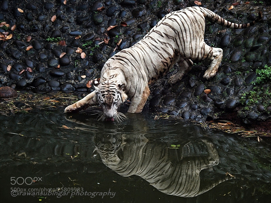 Photograph drinking by Irawan Subingar on 500px