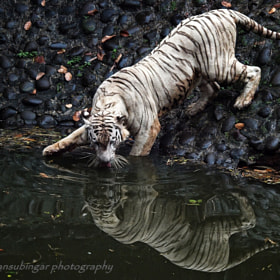 drinking by Irawan Subingar (Irawan-Subingar)) on 500px.com