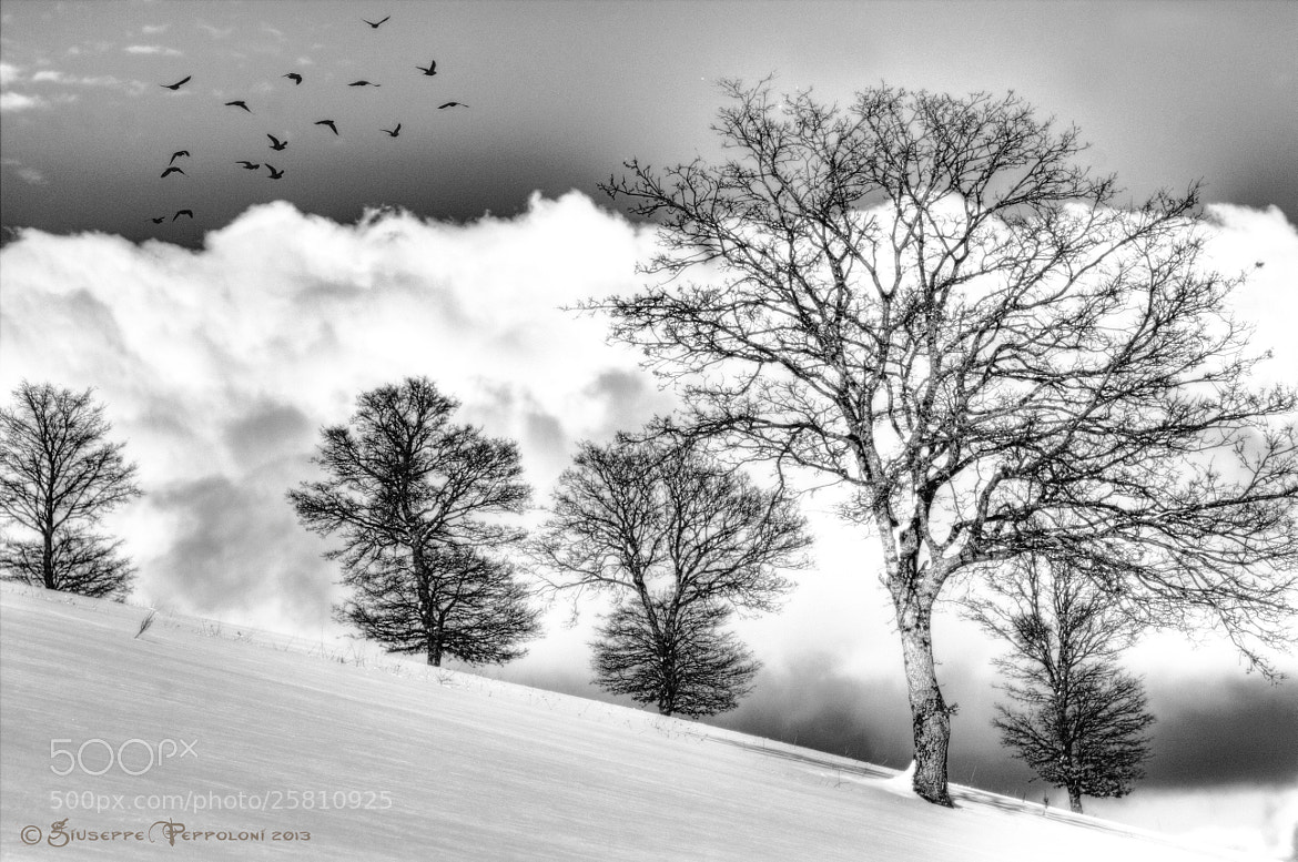 Photograph Trees by Giuseppe  Peppoloni on 500px