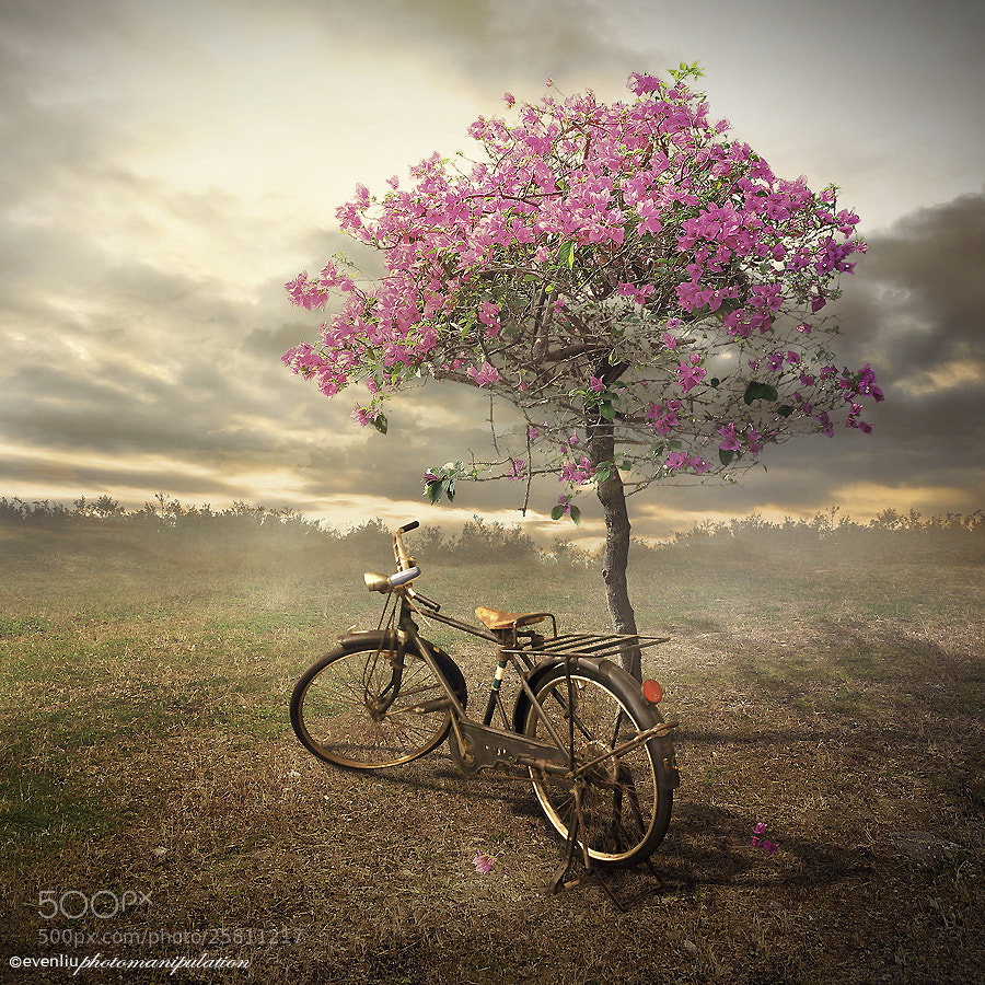 Photograph bicycle by Even Liu on 500px