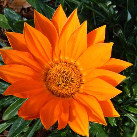 Flower, Nikon COOLPIX S9400