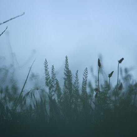 Утро, Sony ILCE-7M2