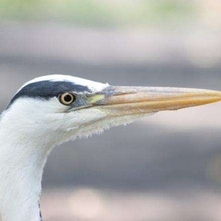 In the Zoo, Canon EOS KISS X5, Sigma 70-300mm f/4-5.6 [APO] DG Macro