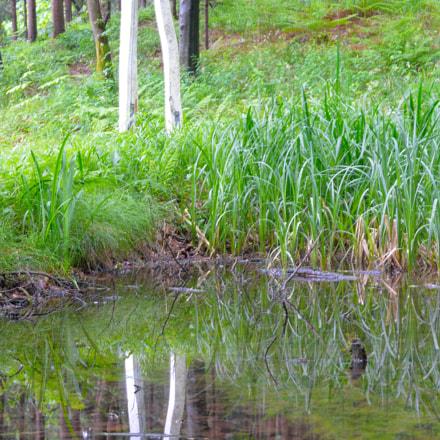 reflection, Nikon DF, AF-S Nikkor 50mm f/1.8G